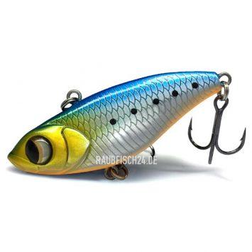 Bigeye Viper V55 Blue Back Orange Belly #39